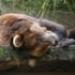 Bild des Benutzers orubado